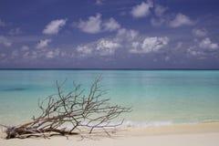 Παραλία Μαλβίδες άμμου Στοκ εικόνα με δικαίωμα ελεύθερης χρήσης