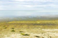 Παραλία με τα πράσινα φύκια στην παραλία οικολογία και έννοια φυσικών καταστροφών στοκ εικόνες