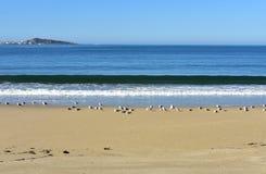 Παραλία με seagulls και τα κύματα Μπλε θάλασσα με τον αφρό, ηλιόλουστη ημέρα, μπλε ουρανός Γαλικία, Ισπανία στοκ εικόνες με δικαίωμα ελεύθερης χρήσης