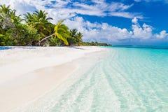 Παραλία παραδείσου των Μαλδίβες Τέλειο τροπικό νησί Όμορφοι φοίνικες και τροπική παραλία Ευμετάβλητος μπλε ουρανός και μπλε λιμνο Στοκ εικόνα με δικαίωμα ελεύθερης χρήσης