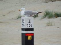 Παραλία πουλιών Στοκ εικόνες με δικαίωμα ελεύθερης χρήσης