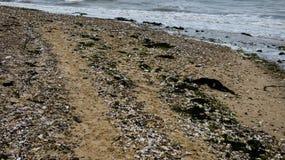 Παραλία στη δύση Mersea, Essex, Αγγλία 10 στοκ φωτογραφία με δικαίωμα ελεύθερης χρήσης