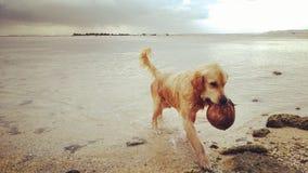 Παραλία της διασκέδασης στοκ φωτογραφίες