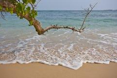 Παραλία της Σρι Λάνκα Στοκ εικόνα με δικαίωμα ελεύθερης χρήσης