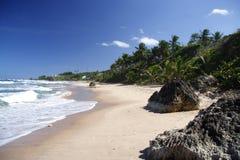 παραλία τροπική Στοκ εικόνα με δικαίωμα ελεύθερης χρήσης