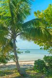 Παραλία, φοίνικας και Sailboat παραδείσου στοκ φωτογραφία με δικαίωμα ελεύθερης χρήσης