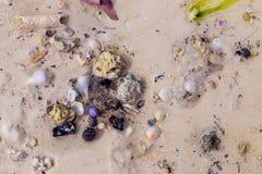 Παραλία Στοκ εικόνες με δικαίωμα ελεύθερης χρήσης