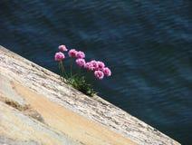 παραλία 3 Στοκ εικόνες με δικαίωμα ελεύθερης χρήσης