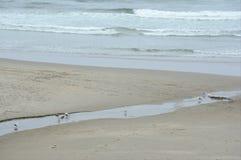 Παραλία Arcadia At Low Tide - ακτή του Όρεγκον στοκ φωτογραφία