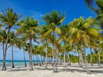 Παραλία Bohol, Φιλιππίνες στοκ εικόνα