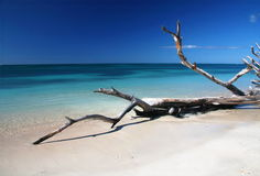 παραλία caribic DRAM στοκ εικόνα