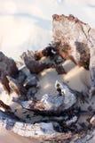 παραλία driftwood Στοκ εικόνα με δικαίωμα ελεύθερης χρήσης