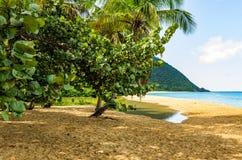 Παραλία Grande Anse από Deshaies, Γουαδελούπη Στοκ εικόνες με δικαίωμα ελεύθερης χρήσης