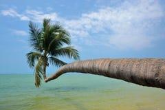παραλία ko phangan Στοκ φωτογραφία με δικαίωμα ελεύθερης χρήσης