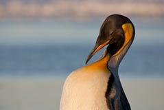 παραλία penguin Στοκ Εικόνες