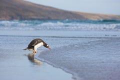 παραλία penguins Στοκ Φωτογραφία