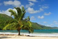 Παραλία Rincon Playa στη Δομινικανή Δημοκρατία Στοκ εικόνες με δικαίωμα ελεύθερης χρήσης