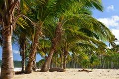 Παραλία Rincon Playa στη Δομινικανή Δημοκρατία Στοκ φωτογραφία με δικαίωμα ελεύθερης χρήσης