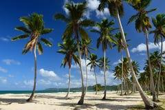 Παραλία Rincon Playa στη Δομινικανή Δημοκρατία Στοκ εικόνα με δικαίωμα ελεύθερης χρήσης