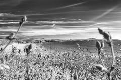 Παραλία Whitesands στη φωτεινή θερινή ημέρα στοκ εικόνα με δικαίωμα ελεύθερης χρήσης