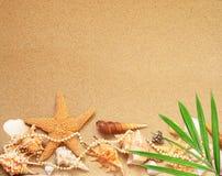 παραλιών ακτών θερινή κυματωγή πετρών άμμου της Κύπρου μεσογειακή Αστερίας και θαλασσινό κοχύλι στην άμμο Στοκ εικόνες με δικαίωμα ελεύθερης χρήσης