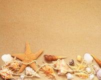 παραλιών ακτών θερινή κυματωγή πετρών άμμου της Κύπρου μεσογειακή Αστερίας και θαλασσινό κοχύλι στην άμμο Στοκ Εικόνες