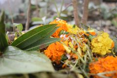 Παραλλαγή λουλουδιών ονείρου σε κάποια τυχαία κατάσταση για να συνεργαστεί με τη ζωή στοκ εικόνες