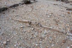 Παραμένει μιας ξύλινης δομής στο αμμοχάλικο στοκ εικόνες