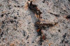 Παραμένει του ξύλινων άνθρακα και των τεφρών μετά από την καύση του καυσόξυλου Στοκ Εικόνα
