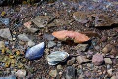 Παραμένει των ζώων θάλασσας σε μια χαλικιώδη ακτή στη Νέα Σκοτία στοκ εικόνες