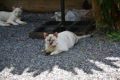 Παραμονή γατών στοκ φωτογραφία με δικαίωμα ελεύθερης χρήσης