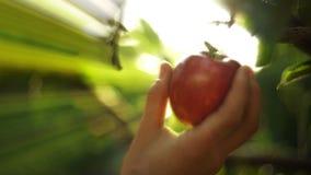 Παραμονή που επιλέγει τη Apple φιλμ μικρού μήκους