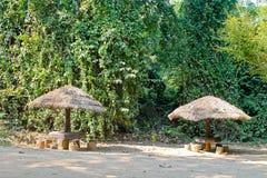 Παραμονή στη ζούγκλα κάτω από την ομπρέλα Στοκ φωτογραφία με δικαίωμα ελεύθερης χρήσης