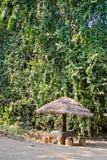 Παραμονή στη ζούγκλα κάτω από την ομπρέλα Στοκ Φωτογραφία