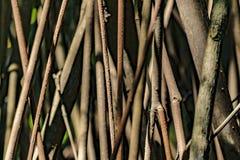Παραμορφώστε την άποψη λεπτομέρειας δέντρων, Ισημερινός στοκ φωτογραφίες με δικαίωμα ελεύθερης χρήσης