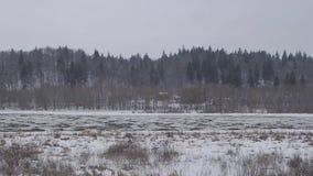 Παρασύρων επιπλέων πάγος πάγου στον ποταμό απόθεμα βίντεο