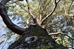 Παρατήρηση της πληρότητας της φύσης από ένα δέντρο στοκ φωτογραφίες