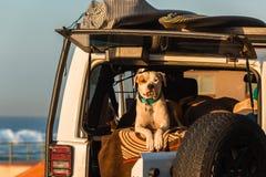 Παραλία αυτοκινήτων Surfers σκυλιών στοκ εικόνες
