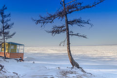 Παραλία ερήμων bighorn Στοκ Εικόνες