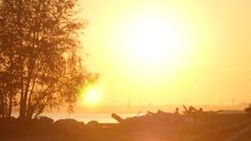 Παραλία και δέντρο στο ηλιοβασίλεμα απόθεμα βίντεο