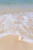 Παραλία και κοχύλι θάλασσας Στοκ Φωτογραφία