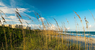 Παραλία κακάου στοκ φωτογραφία με δικαίωμα ελεύθερης χρήσης