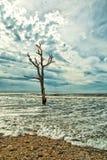 Παραλία κόλπων βοτανικής Στοκ φωτογραφίες με δικαίωμα ελεύθερης χρήσης