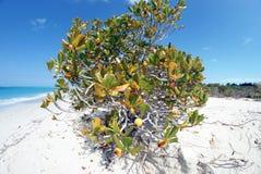 Παραλία 8 κόλπων της Grace στοκ εικόνες