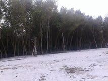 Παραλία μαγγροβίων Στοκ Εικόνα
