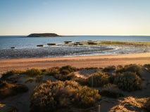 Παραλία με τις χλόες στοκ φωτογραφία με δικαίωμα ελεύθερης χρήσης