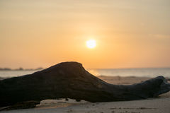 Παραλία πρωινού, Σρι Λάνκα Στοκ εικόνα με δικαίωμα ελεύθερης χρήσης