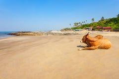 Παραλία σε Goa, Ινδία Στοκ Φωτογραφία