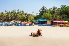Παραλία σε Goa, Ινδία Στοκ φωτογραφίες με δικαίωμα ελεύθερης χρήσης