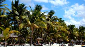 Παραλία σε Punta Cana Στοκ εικόνες με δικαίωμα ελεύθερης χρήσης